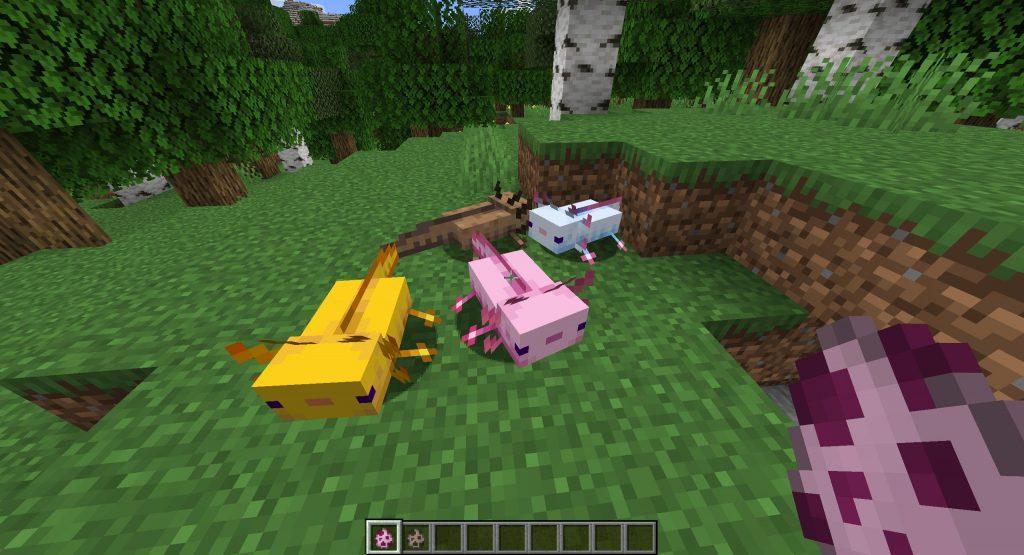 Nowe moby - Aksolotle Minecraft