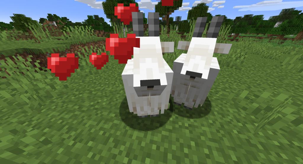 Rozmnażanie kóz w Minecraft